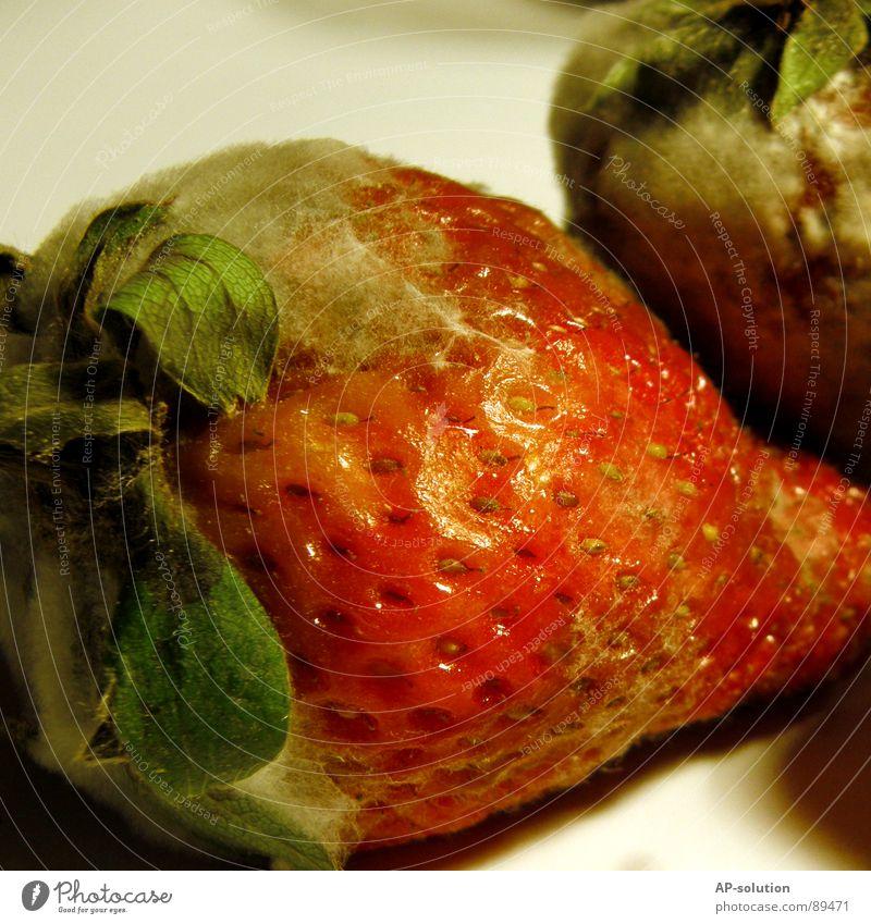 ...der Schimmel war schneller fruchtig Schimmelpilze verfaulen Ernährung rot grün Makroaufnahme Lebensmittel Vitamin lecker süß Geschmackssinn Nahaufnahme