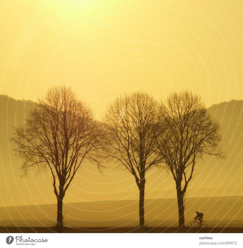 Zett radelt nicht allein ... Allee Landstraße Bundesstraße Morgen Morgennebel Sonnenaufgang Gegenlicht blenden Baum Silhouette Hügel Abstufung Fahrrad