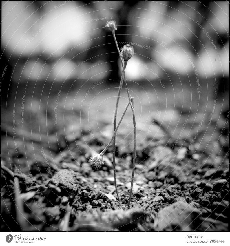 dry Natur alt Pflanze weiß Sommer Einsamkeit schwarz Umwelt Wärme Stein Sand Wetter Feld Erde Sträucher trocken