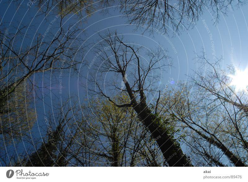 Himmel auf Erden 6 Nadelbaum Wald himmelblau Geometrie Laubbaum Perspektive Nadelwald Laubwald Waldwiese Paradies Waldlichtung ruhig grün Pflanze Baum Blatt