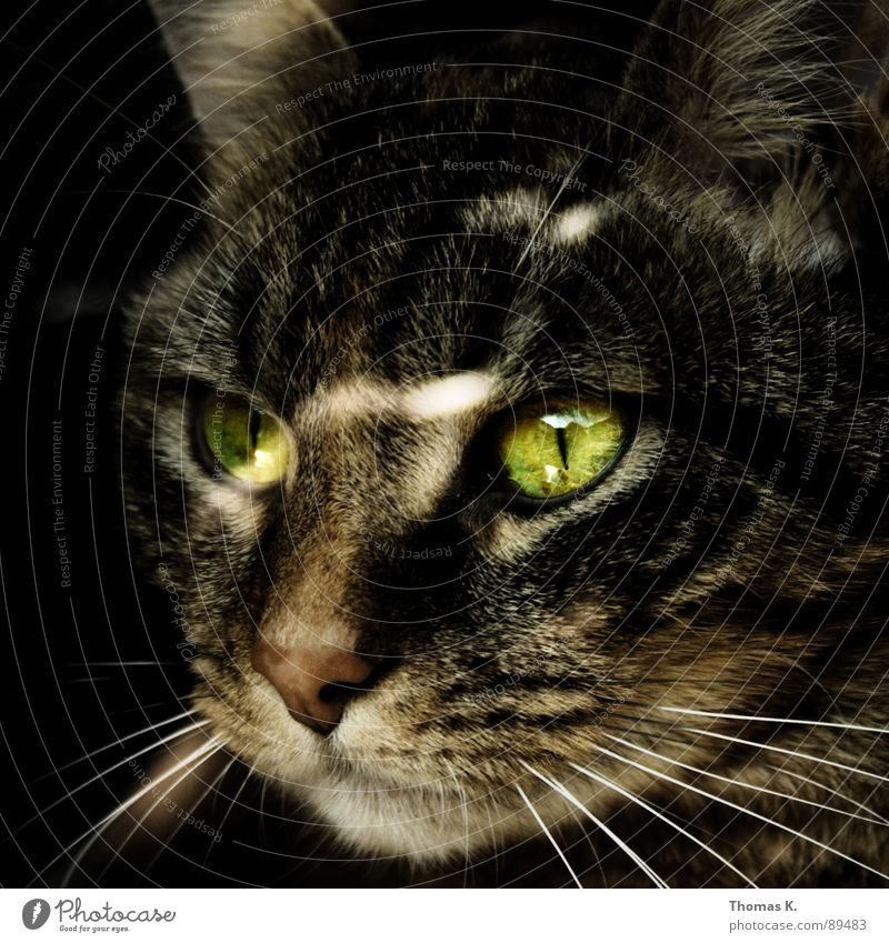 Skandal !!! Er | Sie hat uns alle belogenInnen !! Katze Oberlippenbart Tier Landraubtier Pfote Barthaare Fenster Fell Faultiere Fensterbrett Hauskatze