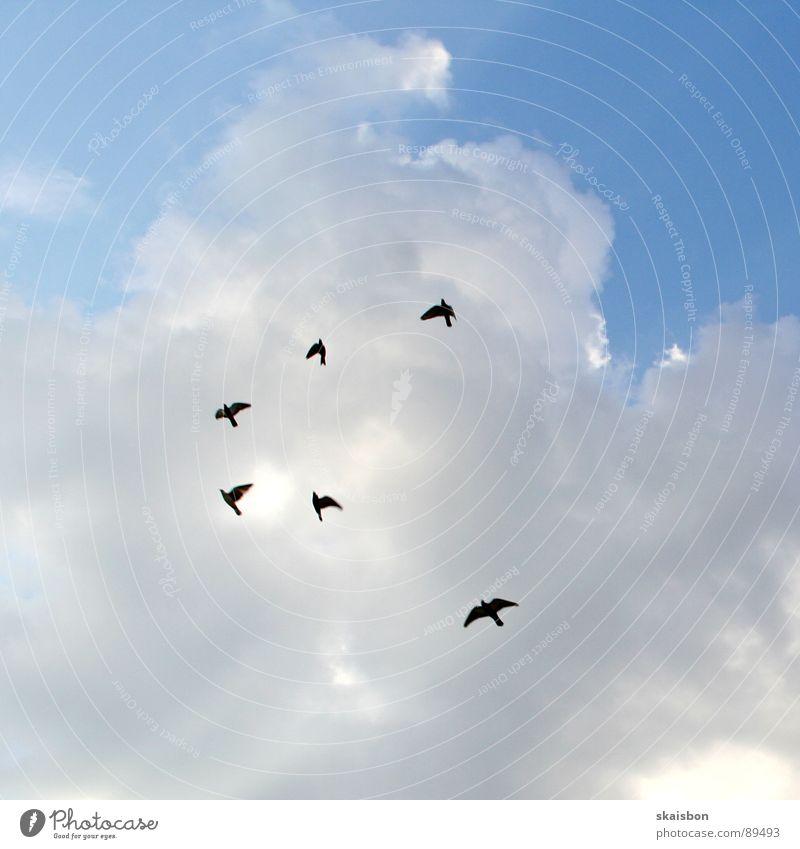 flugbahn Himmel Natur blau weiß Ferien & Urlaub & Reisen Tier Wolken oben Freiheit Bewegung Wege & Pfade Luft Stimmung Vogel fliegen frei