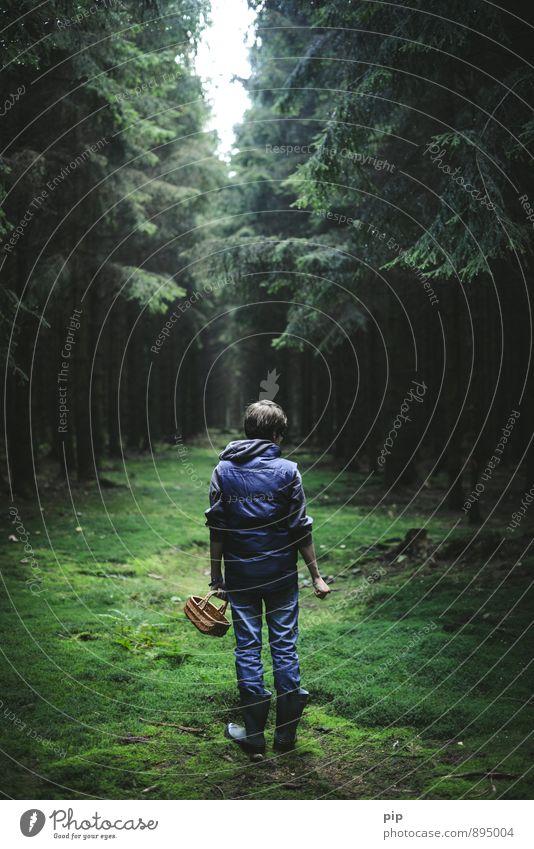 schwammerlsammler Mensch Jugendliche grün Baum Einsamkeit Junger Mann dunkel Wald stehen Rücken Suche Moos Tanne Korb unheimlich Gummistiefel