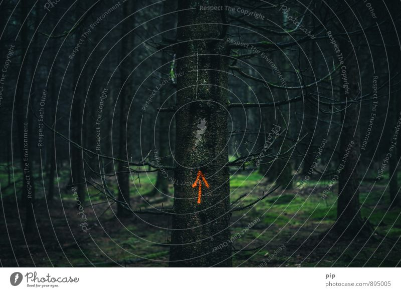 hochwald Baum Moos Fichtenwald Tanne Baumstamm Wald Waldlichtung dunkel gruselig orange Angst gefährlich Pfeil richtungweisend unheimlich ruhig Kriminalität