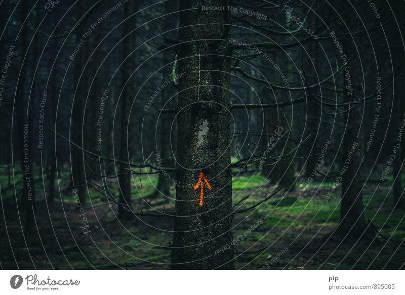 hochwald Baum ruhig dunkel Wald orange Angst gefährlich geheimnisvoll Baumstamm Pfeil gruselig Moos Tanne abgelegen Kriminalität unheimlich