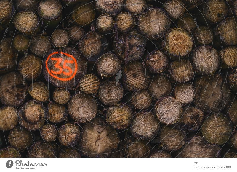 stammnummer Baum Baumstamm Wald orange Holz Forstwirtschaft Forstwald Ziffern & Zahlen 35 Brennholz Abholzung Farbfoto abstrakt Menschenleer Textfreiraum rechts