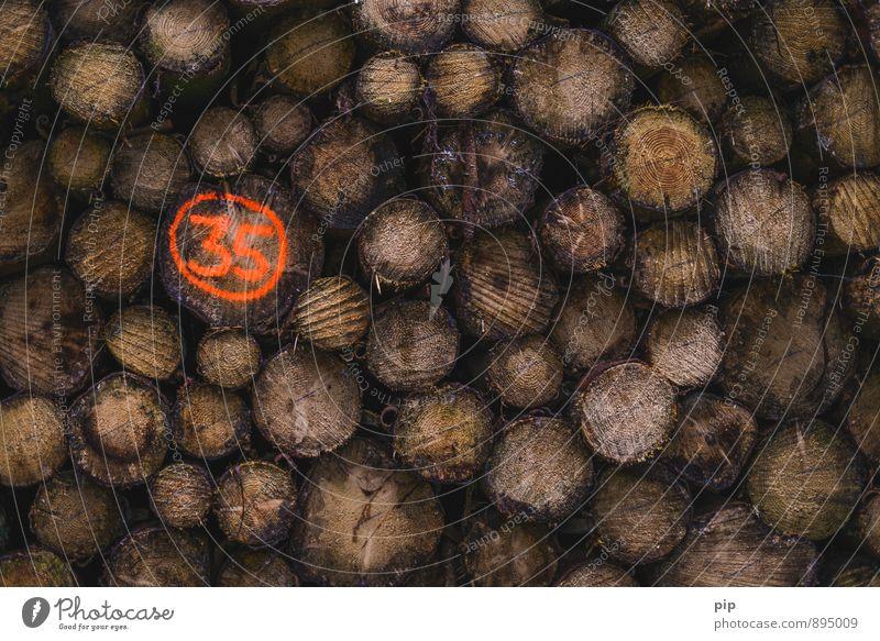 stammnummer Baum Wald Holz orange Ziffern & Zahlen Baumstamm Forstwirtschaft Brennholz Abholzung 35 Forstwald