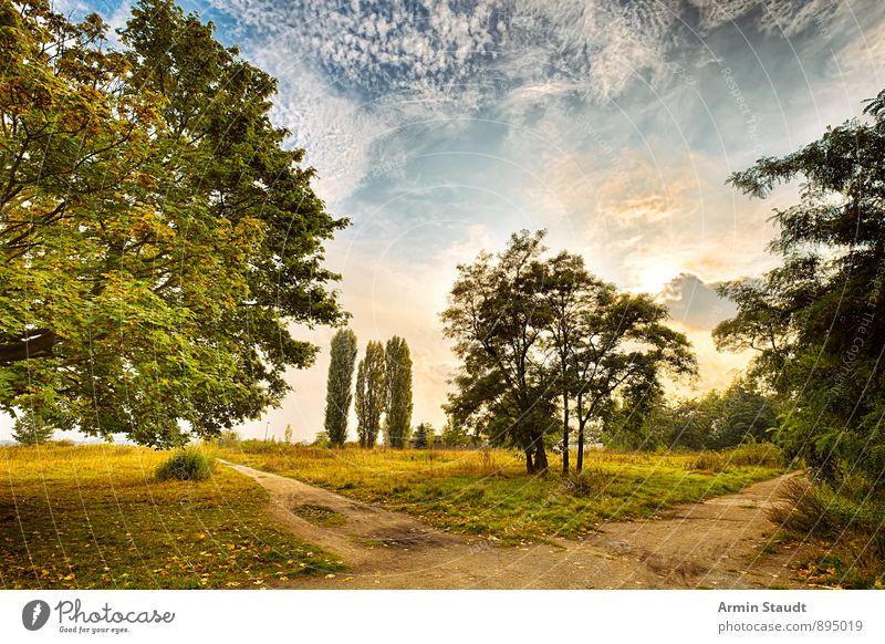 Hommage an Thomas Gainsborough Natur Landschaft Himmel Wolken Sonne Sonnenlicht Herbst Schönes Wetter Baum Park Wiese Wald ästhetisch fantastisch positiv schön