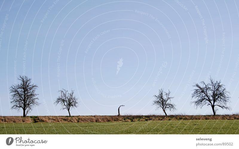 Querulant Baum Pflanze springen Gras Frühling Feld Rasen Blauer Himmel