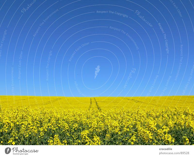 raps #1 Himmel gelb Frühling Feld Streifen Stengel Blühend Landwirtschaft Schönes Wetter ökologisch Bioprodukte Produktion Raps Klimawandel Traktor Kohlendioxid