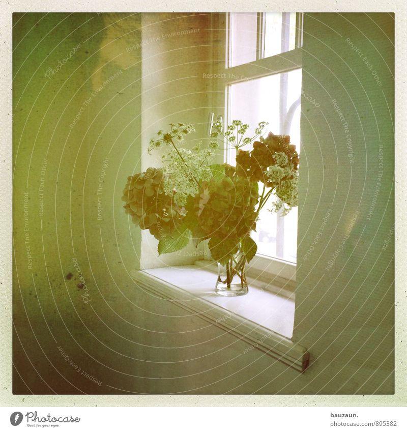 nischendasein. Häusliches Leben Wohnung einrichten Innenarchitektur Dekoration & Verzierung Blume Mauer Wand Fenster Vase Blühend stehen frisch Farbfoto