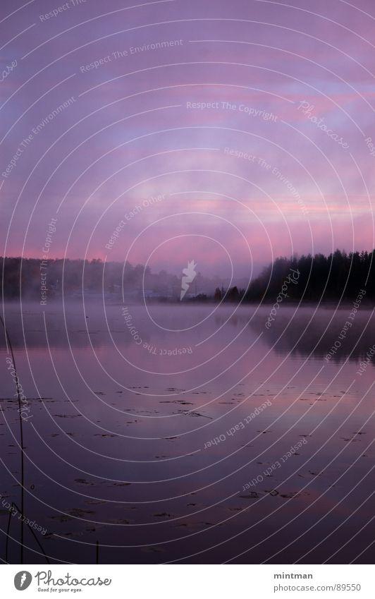 Mystisch Natur Wasser Wald See Landschaft Nebel mystisch