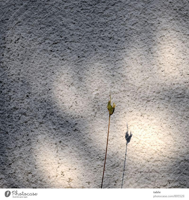 Einzelkämpfer Natur Stadt Pflanze grün Einsamkeit ruhig dunkel Umwelt Wand Gras Mauer natürlich grau Stein hell Fassade