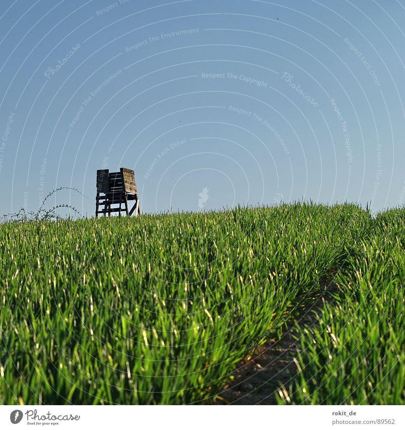 Schleich- oder Schleifweg? grün blau Gras Feld Spuren Jagd Blut Säugetier Schleife krabbeln Treffer töten Jäger Schuss schießen Hochsitz