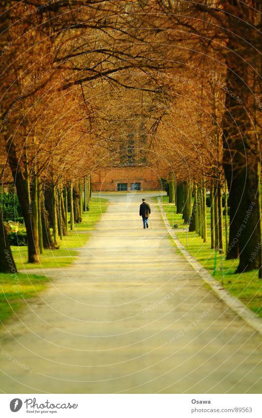 Am Ende des Tunnels Allee Baum Mann Senior gehen Friedhof Park Einsamkeit alt Herbst Trauer Verzweiflung Wege & Pfade Männlicher Senior Spaziergang Gottesacker