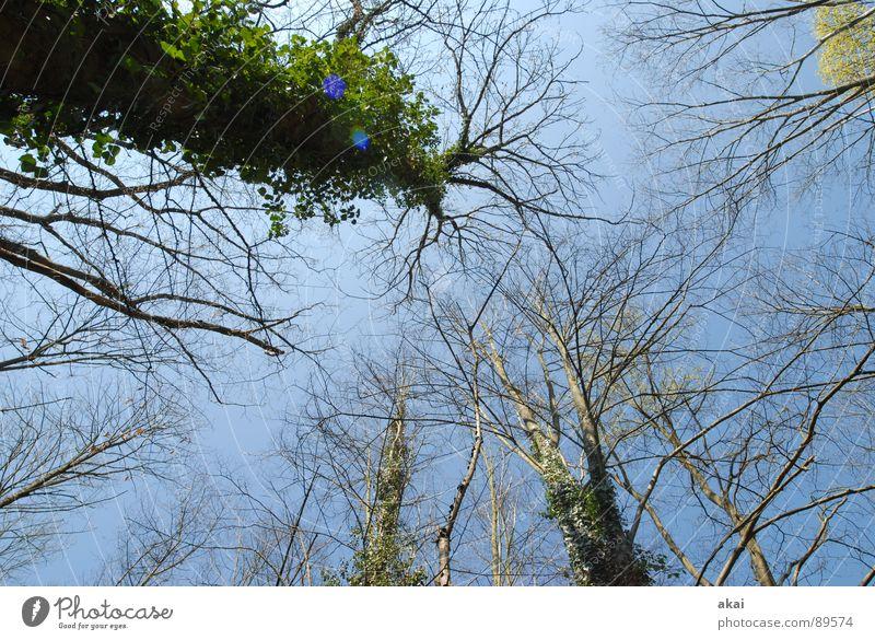 Himmel auf Erden 7 Nadelbaum Wald himmelblau Geometrie Laubbaum Perspektive Nadelwald Laubwald Waldwiese Paradies Waldlichtung ruhig grün Pflanze Baum Blatt