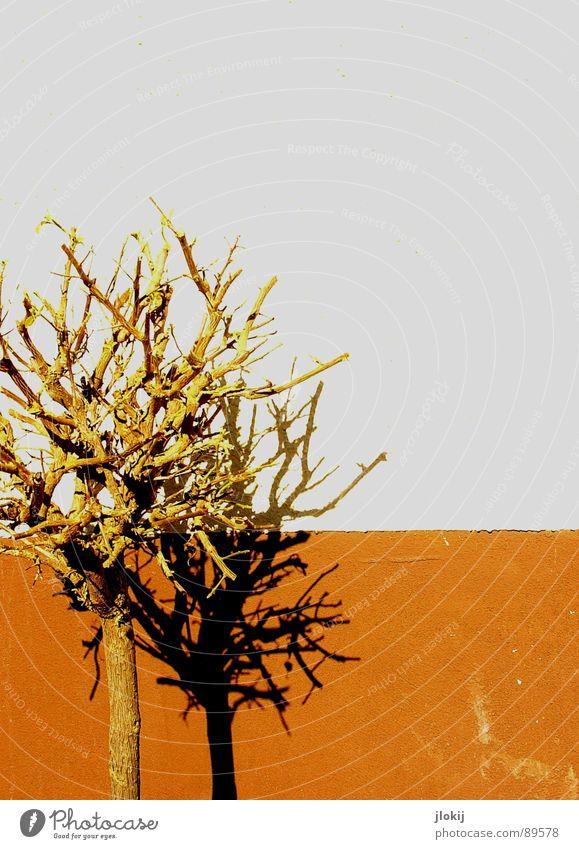 Schattendasein Wand Mauer Baum Pflanze Topf weiß braun Gemälde Haus Wachstum Natur partiell Hintergrundbild live Leben Garten Park pflanztopf Zweig Ast