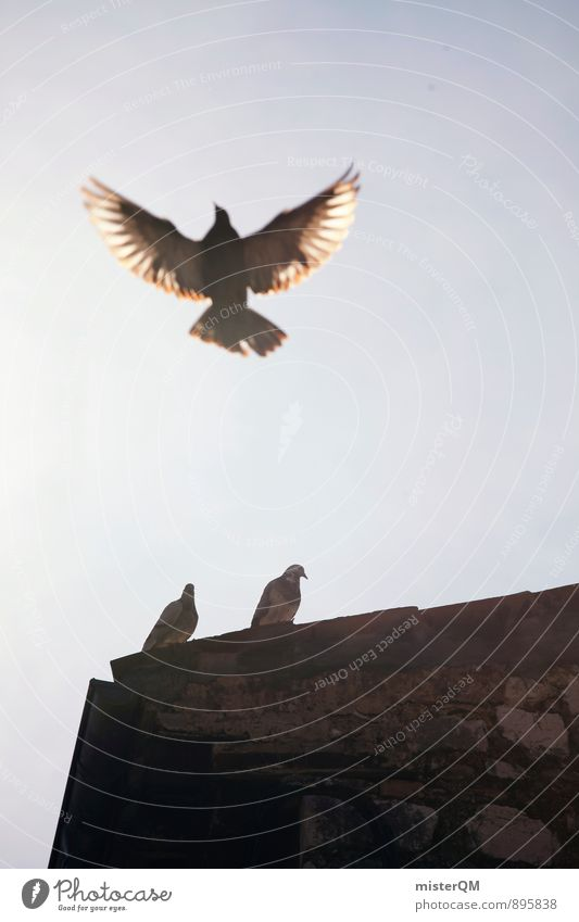 fly. Kunst ästhetisch Zufriedenheit fliegen Taube Taubenschlag Taubentürme Flügel Freiheit 3 Vogel Vogelperspektive Luft Leichtigkeit Spannweite Dach Farbfoto