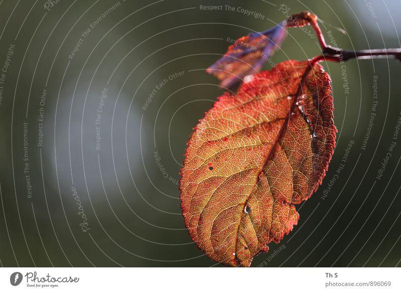 Blatt Natur Pflanze schön Farbe ruhig Herbst natürlich elegant Idylle Zufriedenheit authentisch ästhetisch einfach einzigartig Gelassenheit