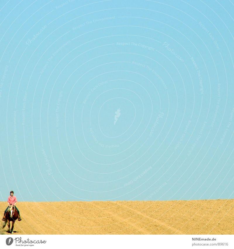 Der Horizont I himmelblau Feld gelb Spurrinne Ferne Pferd rosa weiß Sommer Gefühle Gute Laune Einsamkeit ruhig genießen laufen klein in der Ecke Gelassenheit