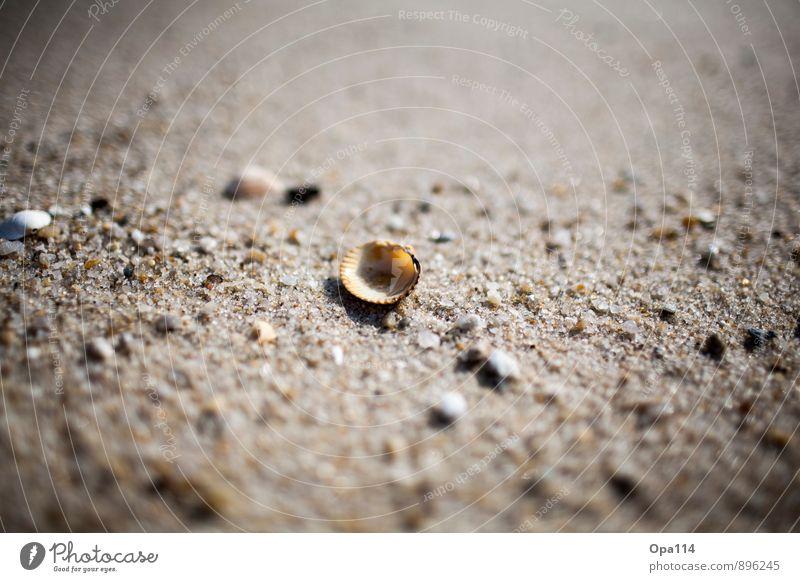 """Muschel Umwelt Natur Pflanze Tier Sommer Küste Strand Nordsee Meer Insel liegen warten Schutz """"Einsamkeit Alleine Sylt Sand Muscheln Steine Geborgenheit"""