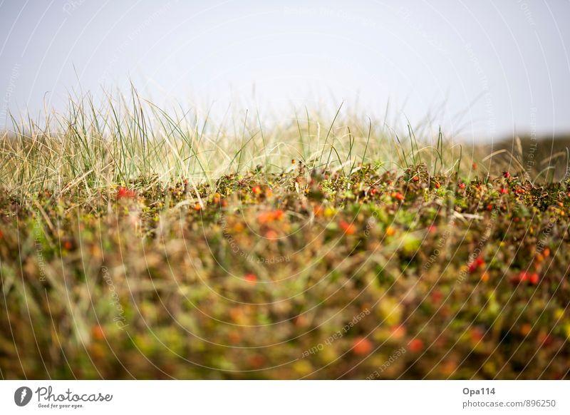 Syltrosen Himmel Natur Pflanze grün Sommer Meer Landschaft Blatt Tier Strand Umwelt Gras Küste Blüte orange Wetter