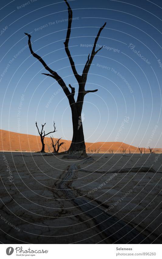 Widerstand Himmel Natur Ferien & Urlaub & Reisen Sommer Baum Landschaft Ferne Umwelt Wärme Freiheit Sand Horizont Tourismus Ausflug Abenteuer Wüste