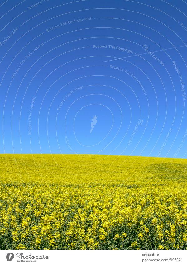 biosprit und luftverschmutzer... #1 Himmel Ferien & Urlaub & Reisen gelb Frühling Freiheit Eis Feld Flugzeug Luftverkehr Streifen Stengel Blühend Landwirtschaft