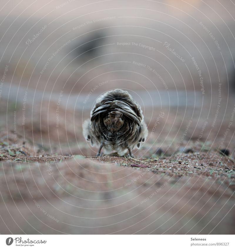 du kannst mich Umwelt Natur Tier Wildtier Vogel Feder 1 klein natürlich weich Nahaufnahme Farbfoto Außenaufnahme Textfreiraum oben Tag Schwache Tiefenschärfe