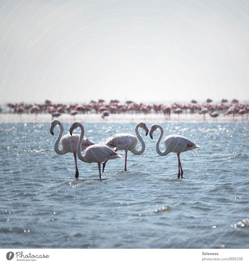<3 Natur Ferien & Urlaub & Reisen Sommer Sonne Meer Tier Strand Ferne Umwelt Küste natürlich Freiheit Vogel Wellen Tourismus nass