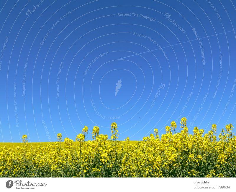 biosprit und luftverschutzer... #2 Himmel Ferien & Urlaub & Reisen gelb Frühling Freiheit Eis Feld Flugzeug fliegen Streifen Stengel Blühend Landwirtschaft