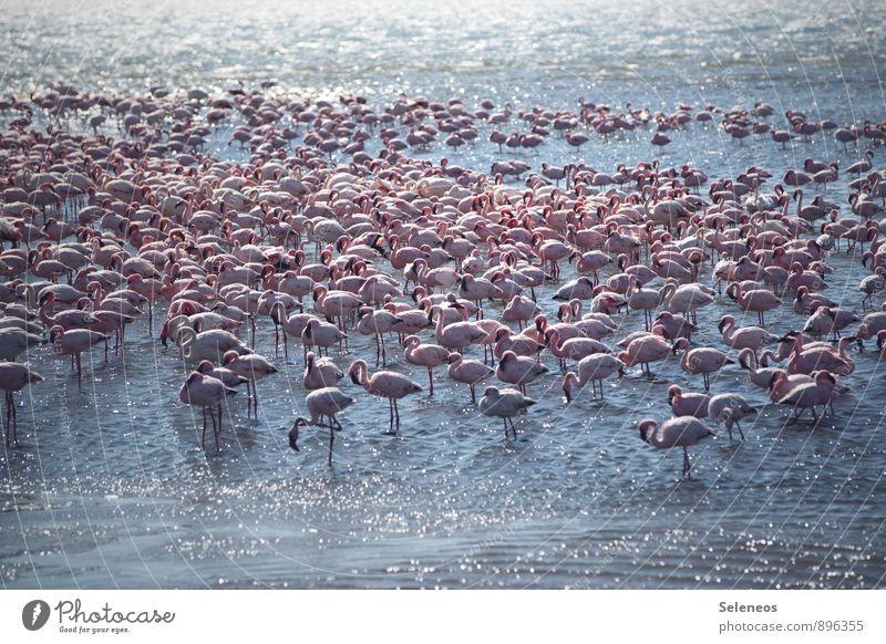 Gruppenlethargie Natur Ferien & Urlaub & Reisen Wasser Sommer Sonne Meer Tier Strand Ferne Umwelt Küste Freiheit Vogel Zusammensein Wildtier Tourismus