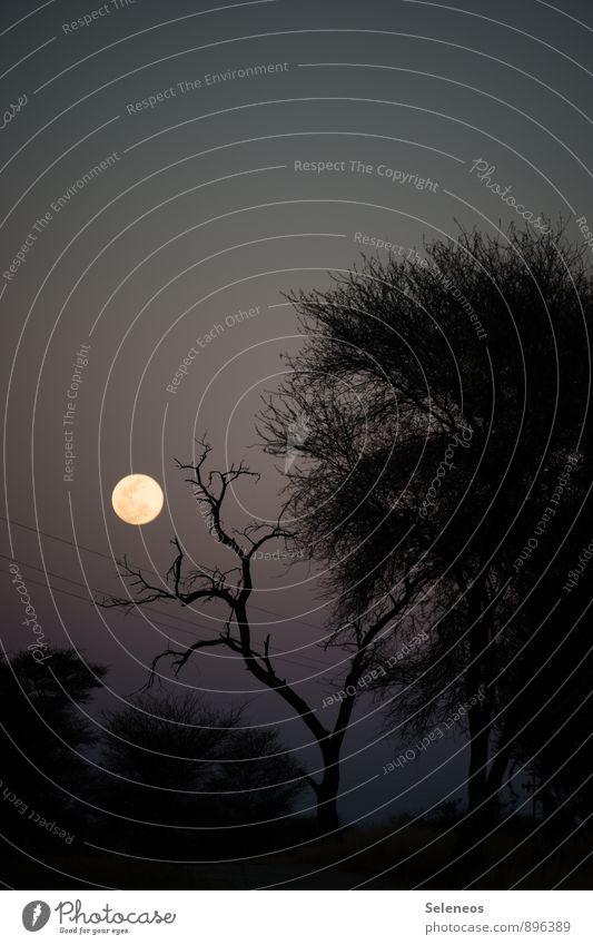Herbstabend Umwelt Natur Landschaft Himmel Wolkenloser Himmel Nachthimmel Mond Vollmond Winter Pflanze Baum dunkel Farbfoto Außenaufnahme Menschenleer Dämmerung