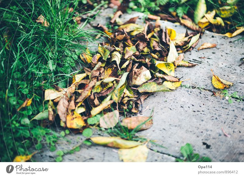 Herbstlich Natur alt grün Blatt gelb Wiese Gras Blüte Zeit Stein Garten braun Park Wetter gold