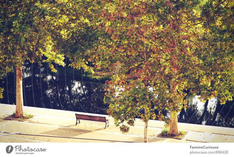 LaFrance_01 Natur Sommer Herbst Baum Garten Park ruhig Baumkrone Flussufer Parkbank herbstlich sommerlich Reflexion & Spiegelung Erholung Urlaubsort Bank