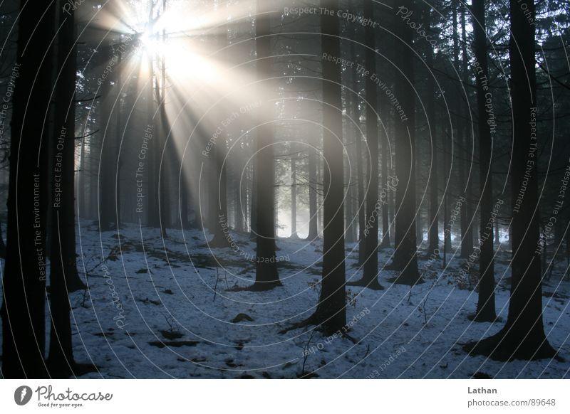 Licht im Wald Natur Baum Winter Einsamkeit dunkel Frühling Beleuchtung Nebel mystisch unheimlich Schwarzwald Lichtstrahl Nadelwald