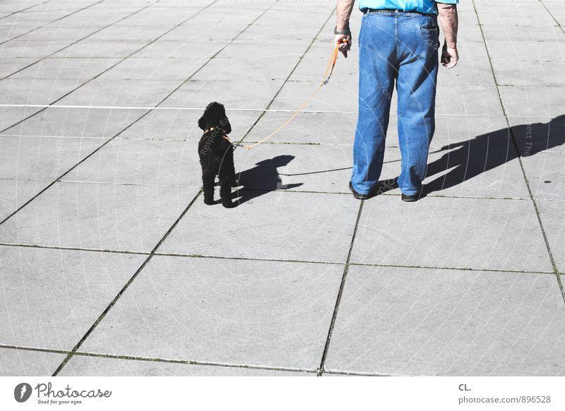 antonio geht gassi Hund Mensch Mann Tier Erwachsene Leben Senior Freundschaft Zusammensein maskulin Freizeit & Hobby Hose Jeanshose Haustier Sympathie