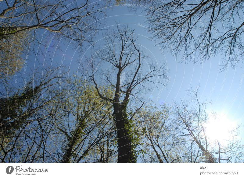 Himmel auf Erden 8 Nadelbaum Wald himmelblau Geometrie Laubbaum Perspektive Nadelwald Laubwald Waldwiese Paradies Waldlichtung ruhig grün Pflanze Baum Blatt