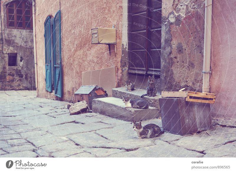 Türsteher Katze Erholung ruhig Haus Tier Wand Mauer Treppe warten beobachten Tiergruppe einfach Dorf Haustier Unbewohnt schäbig
