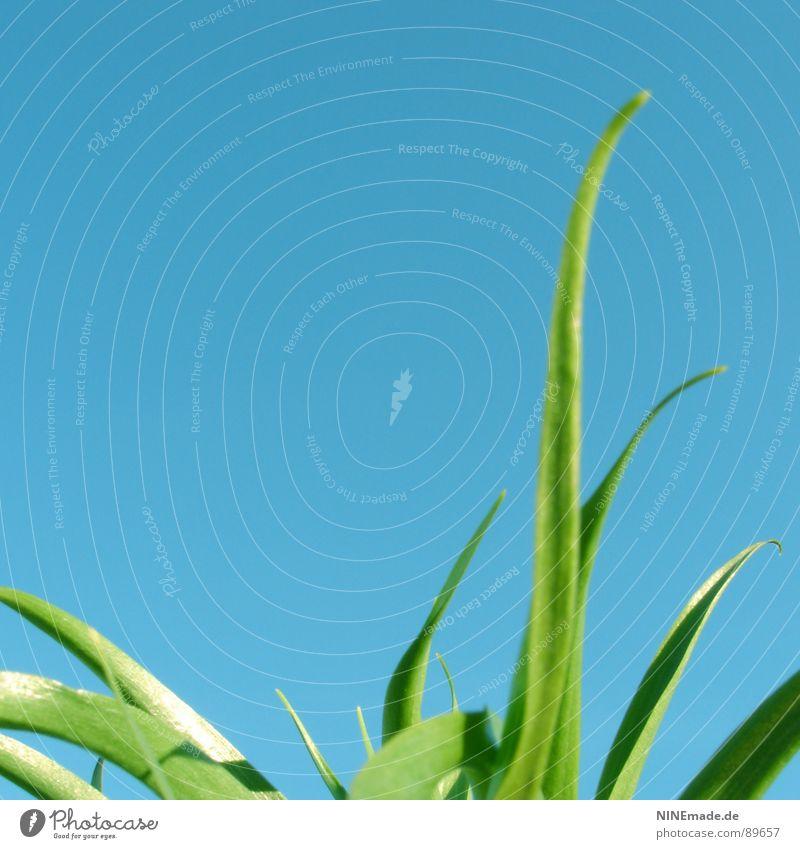 Auf der grünen Wiese ... III himmelblau Gras Halm Sommer Frühling Gute Laune Fröhlichkeit frisch saftig Zufriedenheit Freizeit & Hobby Schönes Wetter mehrfarbig