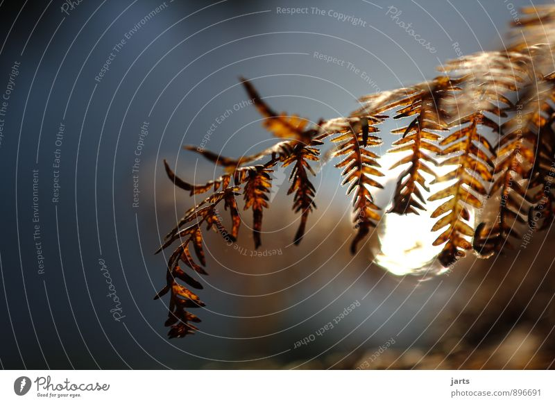 stille Natur Pflanze ruhig Herbst natürlich Idylle Gelassenheit Farn Wildpflanze