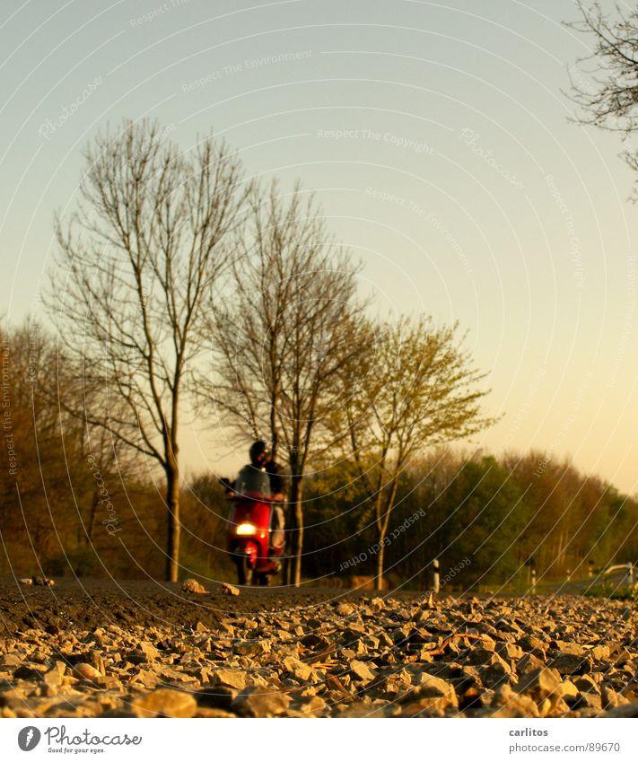 Easy Rider ... Landstraße kultig Rocker Kleinmotorrad Warnfarbe Froschperspektive Straßenrand Seitenstreifen Krötenwanderung Geschwindigkeitsbegrenzung