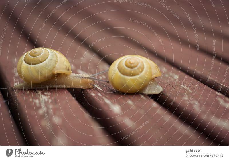 Geduld | Wettrennen Tier Schneckenhaus 2 Tierpaar braun gelb Gelassenheit Geschwindigkeit Mobilität stagnierend Wandel & Veränderung Ferne Häusliches Leben