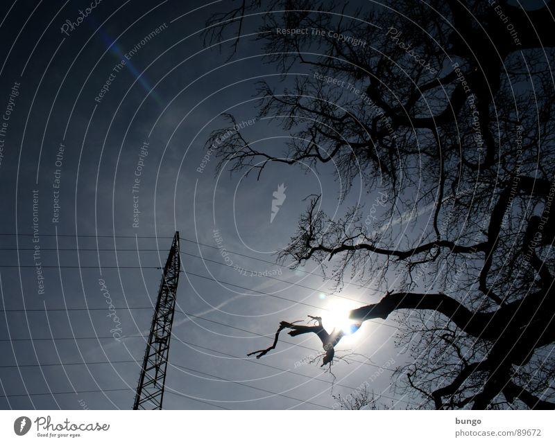 Tenderness Baum verzweigt Pflanze Strommast Elektrizität Kabel Wolken lang Gegenlicht Silhouette dunkel bedrohlich Unwetter Naturphänomene Dämmerung Nacht