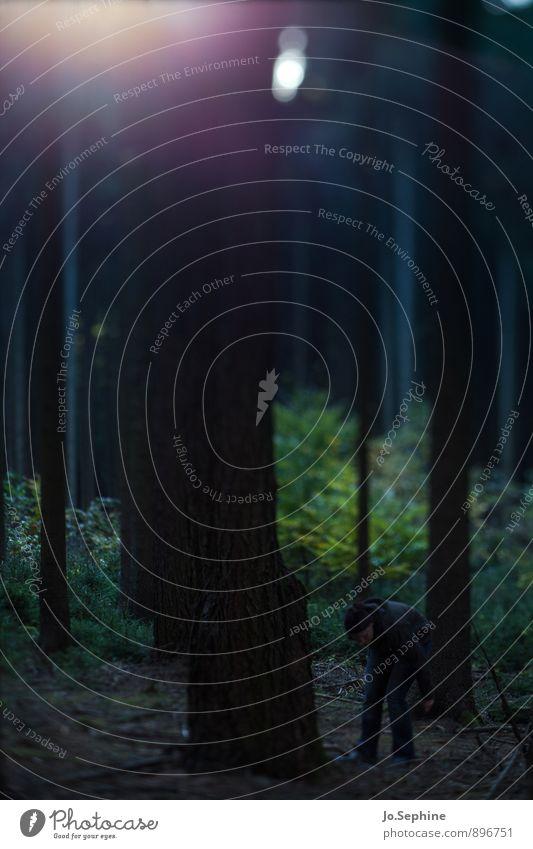 in the woods Mensch Frau Natur Baum Erholung ruhig dunkel Wald kalt Umwelt Erwachsene Herbst feminin wandern Spaziergang Neugier