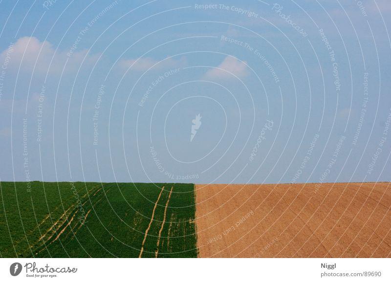 3Drittel Feld eckig grün gelb Sommer Frühling Horizont leer Einsamkeit ruhig Landwirtschaft Himmel blau Ferne Freiheit Schönes Wetter Landschaft Ernte Kontrast