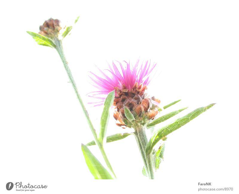 Blume Pflanze weiß Fototechnik