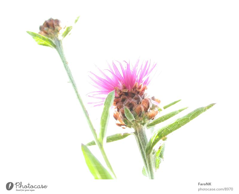 Blume weiß Blume Pflanze Fototechnik