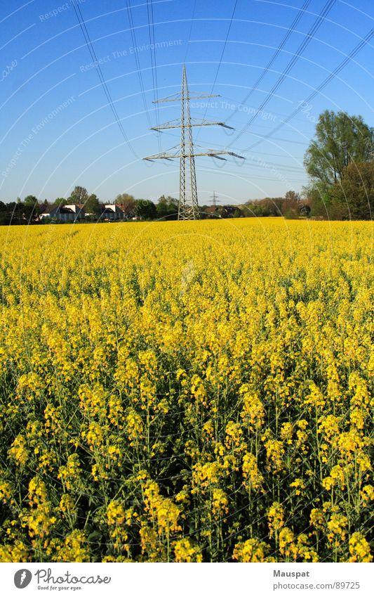 Rapsfeld Himmel blau gelb Ferne Frühling Elektrizität Blühend Strommast Leitung