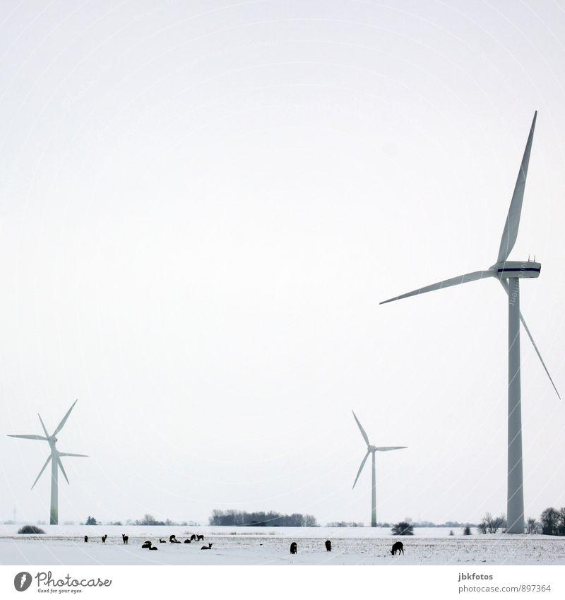 KEIN // Auslaufmodell // Energiewende 2.1 Natur Landschaft Tier Winter Umwelt Schnee Horizont Energiewirtschaft Erde Kraft Wildtier Elektrizität Tiergruppe